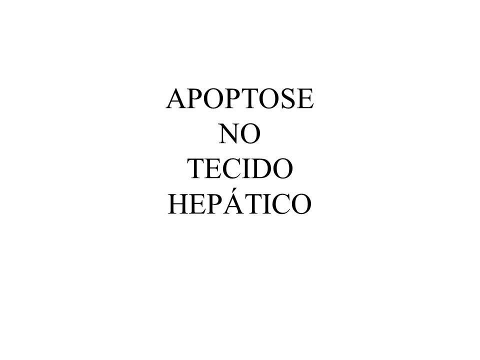 APOPTOSE NO TECIDO HEPÁTICO