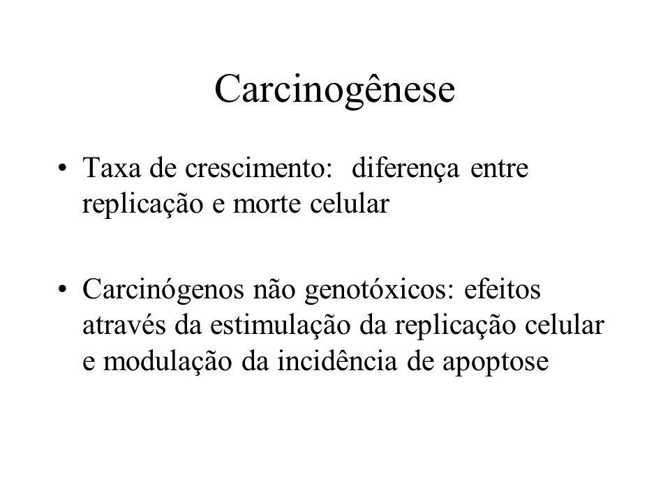 Carcinogênese Taxa de crescimento: diferença entre replicação e morte celular Carcinógenos não genotóxicos: efeitos através da estimulação da replicaç