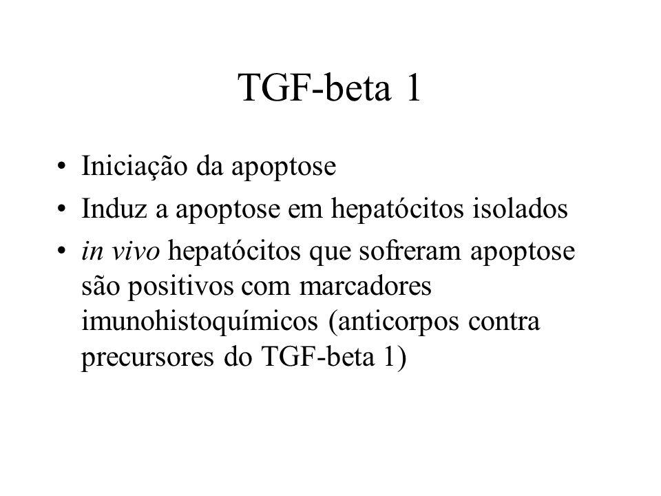 TGF-beta 1 Iniciação da apoptose Induz a apoptose em hepatócitos isolados in vivo hepatócitos que sofreram apoptose são positivos com marcadores imuno