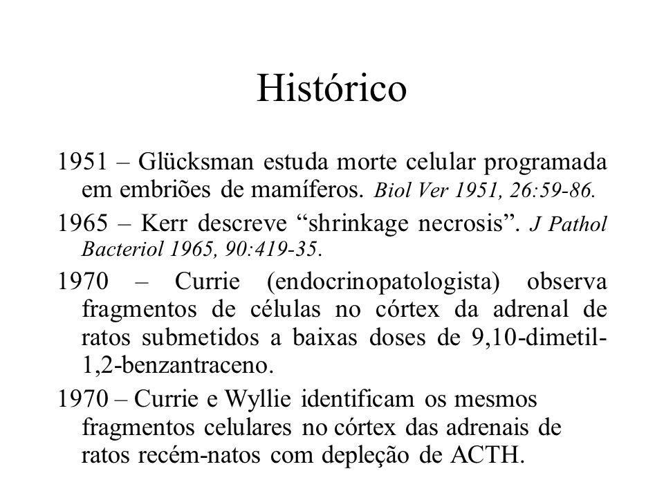 Histórico 1951 – Glücksman estuda morte celular programada em embriões de mamíferos. Biol Ver 1951, 26:59-86. 1965 – Kerr descreve shrinkage necrosis.