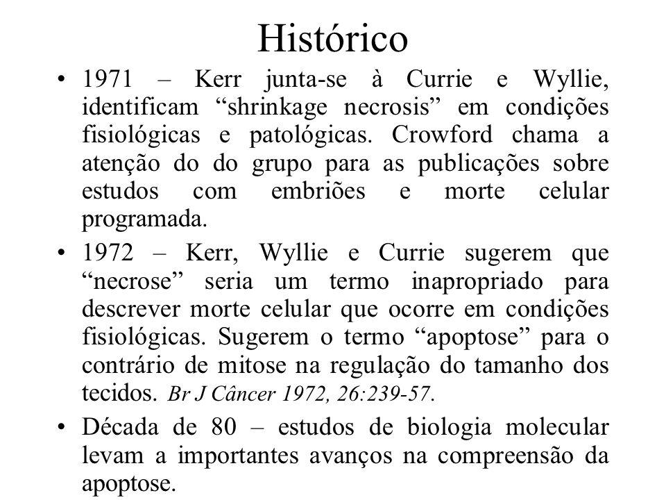 Histórico 1971 – Kerr junta-se à Currie e Wyllie, identificam shrinkage necrosis em condições fisiológicas e patológicas. Crowford chama a atenção do