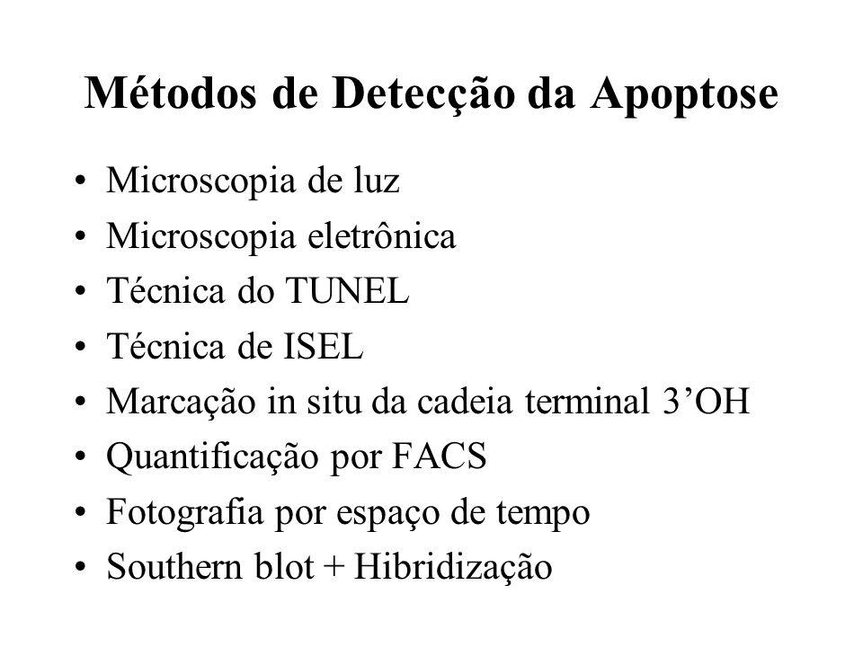 Métodos de Detecção da Apoptose Microscopia de luz Microscopia eletrônica Técnica do TUNEL Técnica de ISEL Marcação in situ da cadeia terminal 3OH Qua