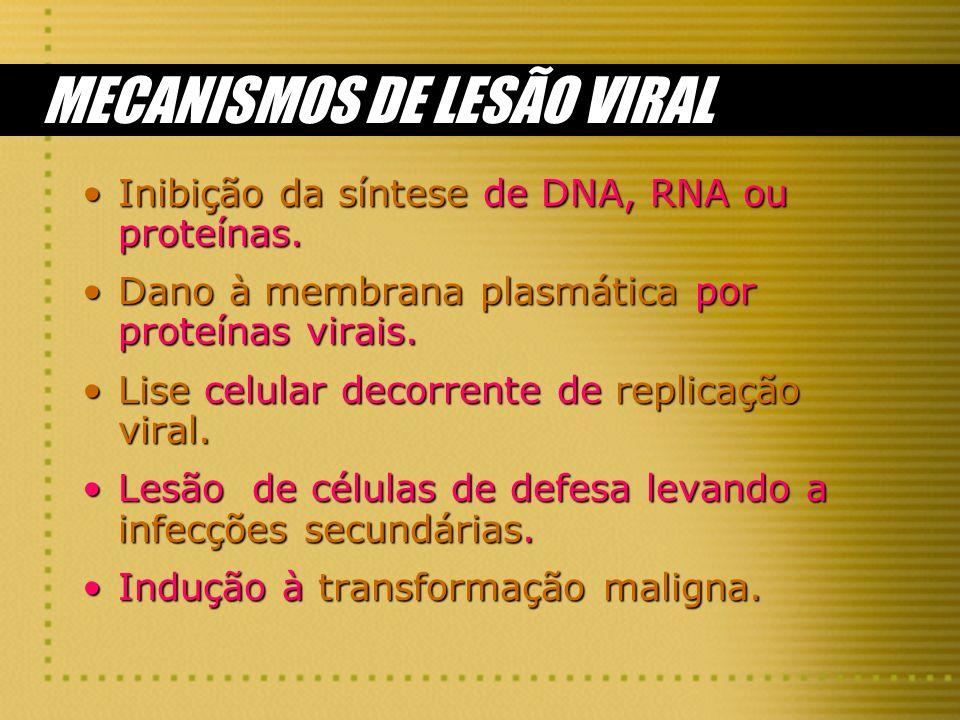 MECANISMOS DE LESÃO VIRAL Inibição da síntese de DNA, RNA ou proteínas.Inibição da síntese de DNA, RNA ou proteínas. Dano à membrana plasmática por pr