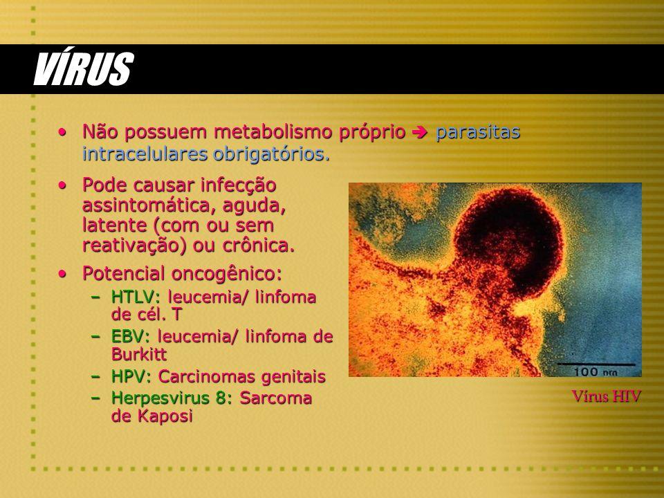 VÍRUS Não possuem metabolismo próprio parasitas intracelulares obrigatórios.Não possuem metabolismo próprio parasitas intracelulares obrigatórios. Pod