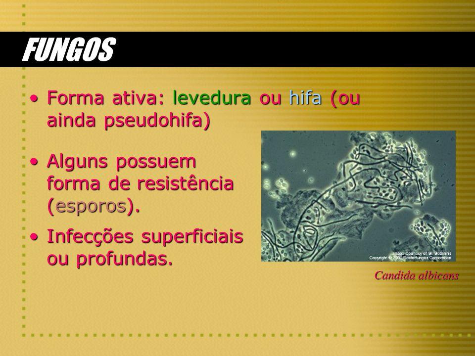 FUNGOS Forma ativa: levedura ou hifa (ou ainda pseudohifa)Forma ativa: levedura ou hifa (ou ainda pseudohifa) Alguns possuem forma de resistência (esp