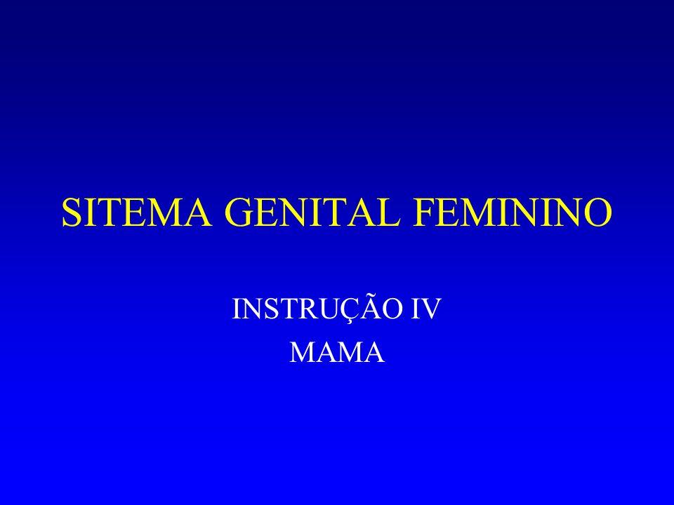 SITEMA GENITAL FEMININO INSTRUÇÃO IV MAMA