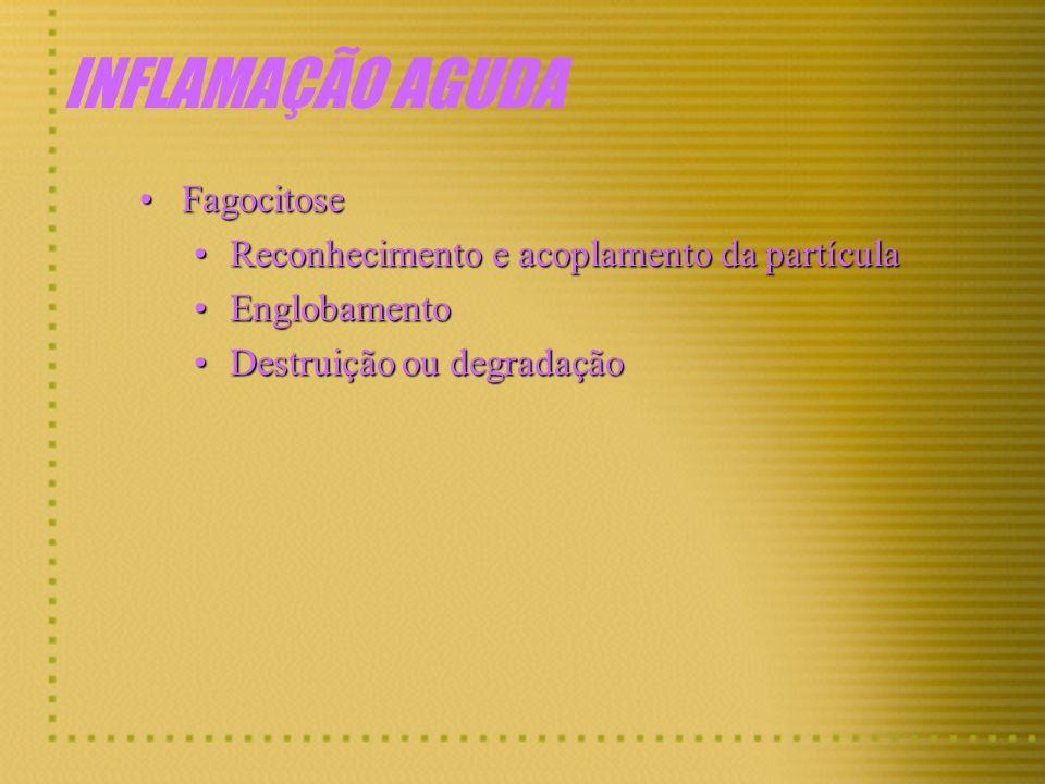 INFLAMAÇÃO AGUDA Fagocitose Fagocitose Reconhecimento e acoplamento da partícula Reconhecimento e acoplamento da partícula Englobamento Englobamento D