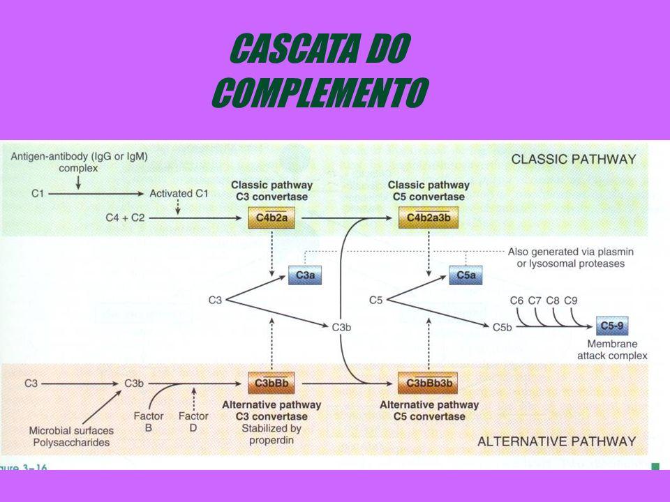 CASCATA DO COMPLEMENTO