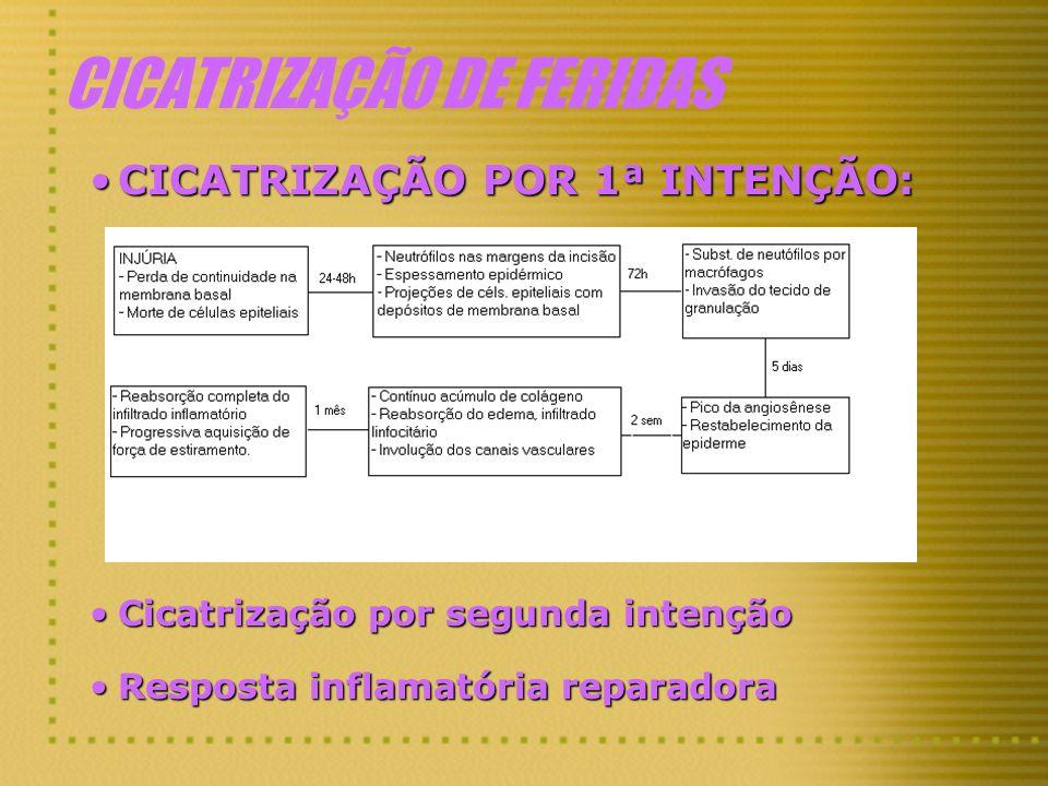CICATRIZAÇÃO DE FERIDAS CICATRIZAÇÃO POR 1ª INTENÇÃO:CICATRIZAÇÃO POR 1ª INTENÇÃO: Cicatrização por segunda intençãoCicatrização por segunda intenção
