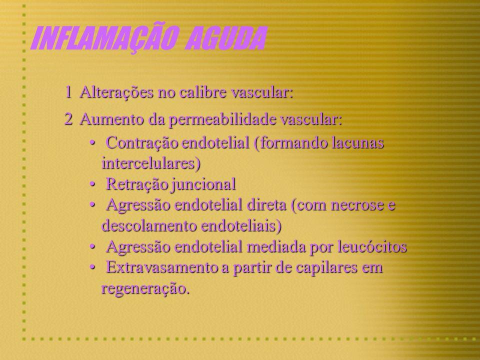MEDIADORES QUÍMICOS DA INFLAMAÇÃO SISTEMA DA COAGULAÇÃO X INFLAMAÇÃO: Fator Hageman Ativado Fator XII XIa PROTROMBINATROMBINA TROMBINA FIBRINOGÊNIOFIBRINA FIBRINA FIBRINOPEPTÍDEOS PRÉ-CALICREÍNACALICREÍNA CAPM BRADICININA