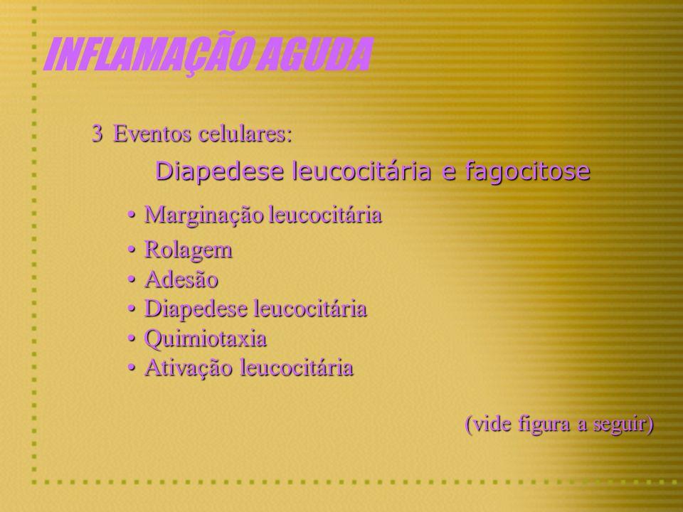 INFLAMAÇÃO AGUDA 3Eventos celulares: Diapedese leucocitária e fagocitose Marginação leucocitáriaMarginação leucocitária RolagemRolagem AdesãoAdesão Di