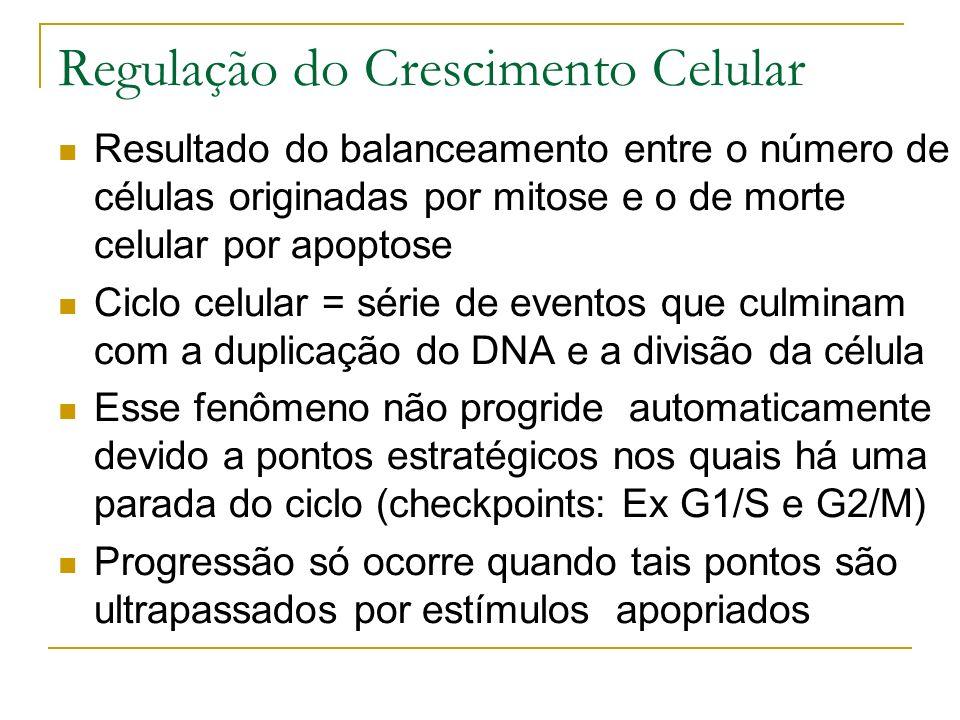 Regulação do Crescimento Celular Resultado do balanceamento entre o número de células originadas por mitose e o de morte celular por apoptose Ciclo celular = série de eventos que culminam com a duplicação do DNA e a divisão da célula Esse fenômeno não progride automaticamente devido a pontos estratégicos nos quais há uma parada do ciclo (checkpoints: Ex G1/S e G2/M) Progressão só ocorre quando tais pontos são ultrapassados por estímulos apopriados