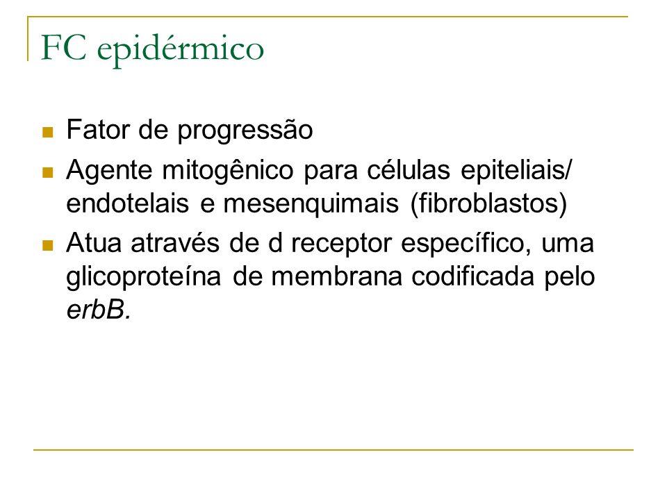 FC epidérmico Fator de progressão Agente mitogênico para células epiteliais/ endotelais e mesenquimais (fibroblastos) Atua através de d receptor específico, uma glicoproteína de membrana codificada pelo erbB.