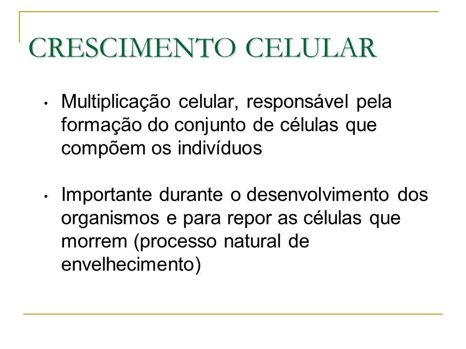 CRESCIMENTO CELULAR Multiplicação celular, responsável pela formação do conjunto de células que compõem os indivíduos Importante durante o desenvolvimento dos organismos e para repor as células que morrem (processo natural de envelhecimento)