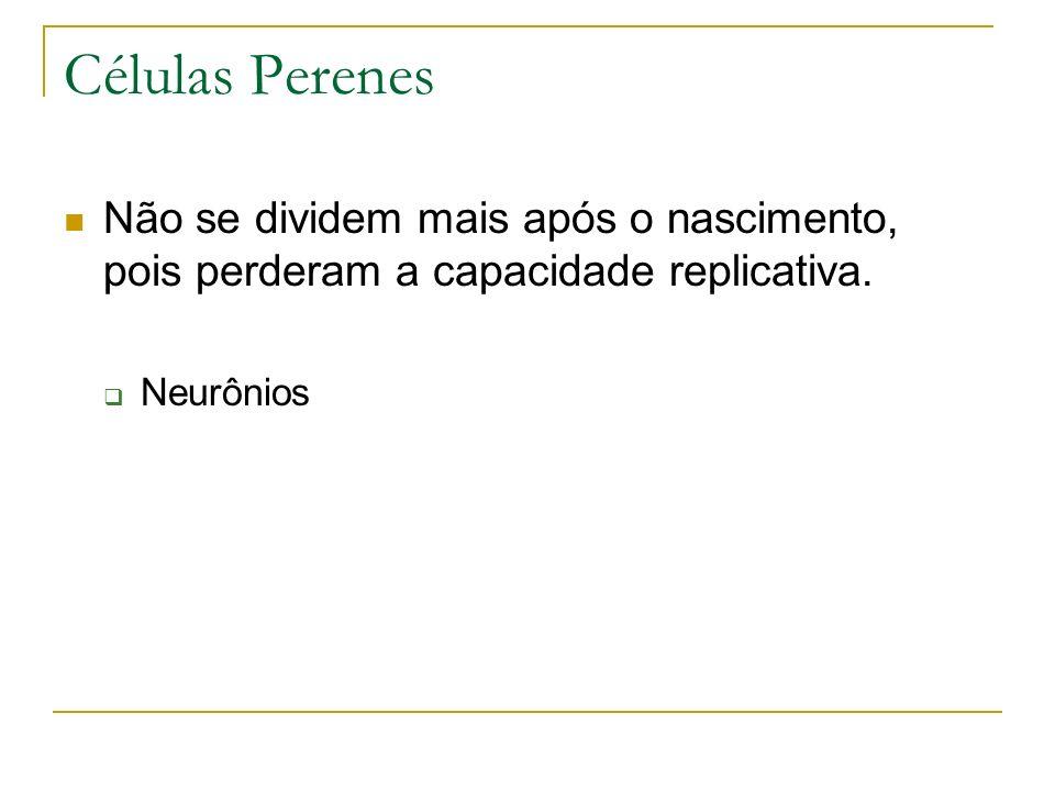 Células Perenes Não se dividem mais após o nascimento, pois perderam a capacidade replicativa. Neurônios