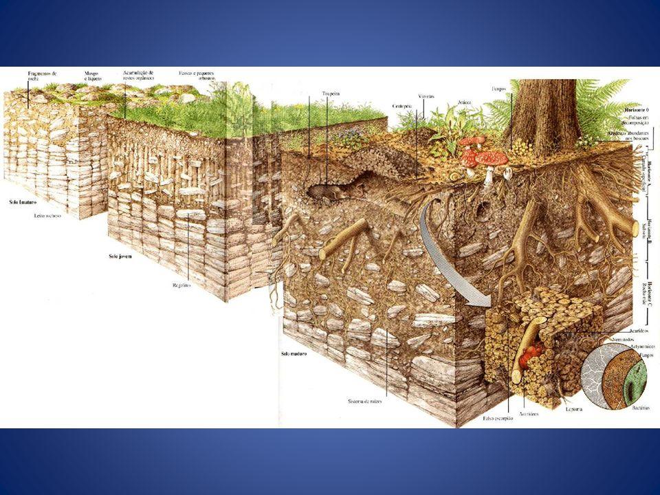 Definição - Estrutura Podem ser: – Laminar – Prismática e Colunar – Em blocos (angulares e subangulares) – Granular