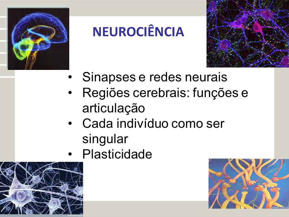 NEUROCIÊNCIA Sinapses e redes neurais Regiões cerebrais: funções e articulação Cada indivíduo como ser singular Plasticidade
