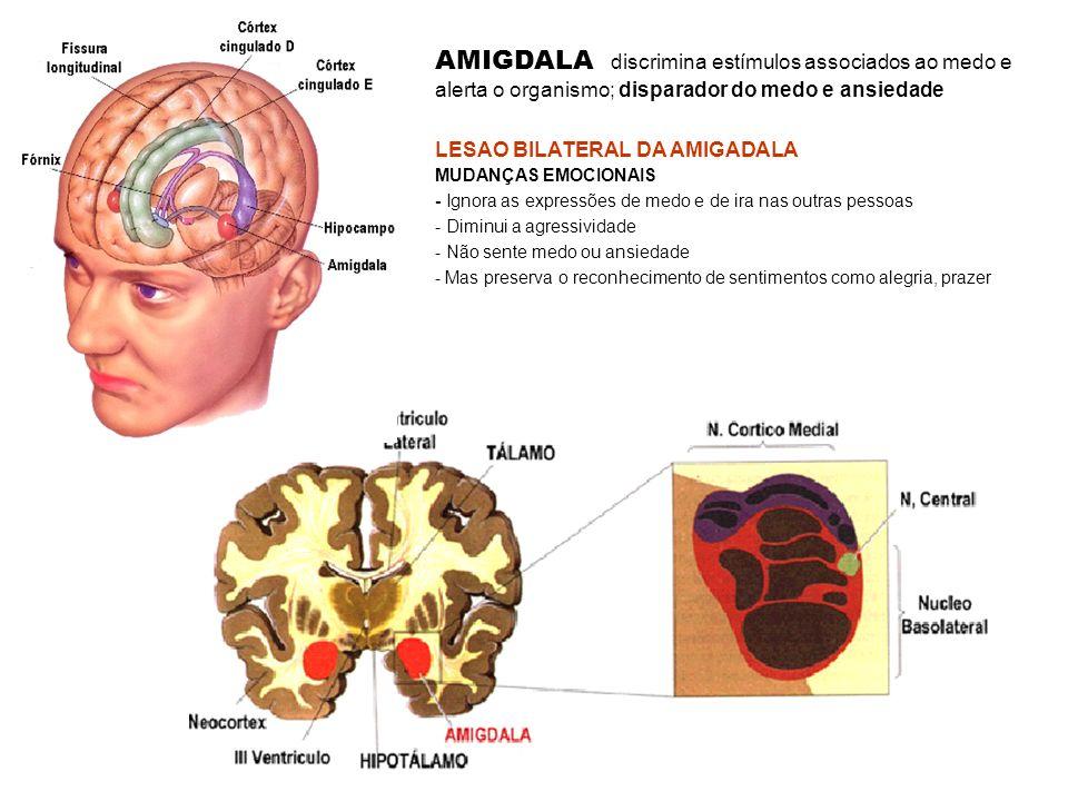 start Percepção consciente Percepção subconsciente A amigdala recebe aferências de todo o neocortex, do giro do cíngulo e do hipocampo.