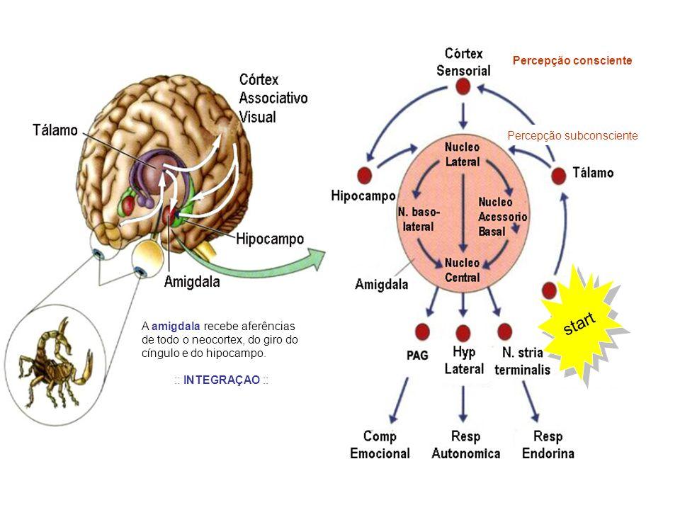AMIGDALA Núcleos Centrais AMIGDALA Núcleos Centrais Estímulos nocivos primários (inatos) Estímulos nocivos condicionados (aprendidos) Destino Estimulação da amigdala Expressões somáticas e viscerais Hipotálamo lateralAtivação simpática Taquicardia, dilatação pupilar, piloereçao, aumento da pressão sanguínea, etc N.