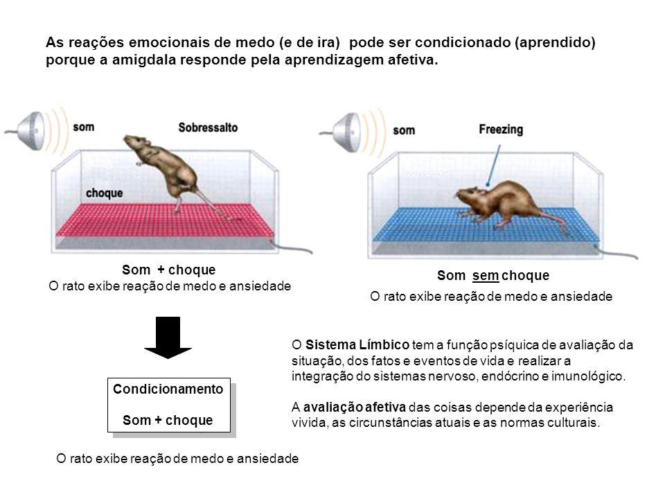 Condicionamento Som + choque Condicionamento Som + choque O rato exibe reação de medo e ansiedade Som sem choque O rato exibe reação de medo e ansieda