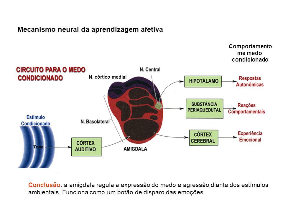 Estabelecimento de hierarquia Manutenção da hierarquia Dominante Submisso Lesão bilateral da amigdala do dominante Lesão bilateral da amigdala do dominante Agressividade Rebaixamento na hierarquia social A redução nos níveis de 5HT também causa Agressividade