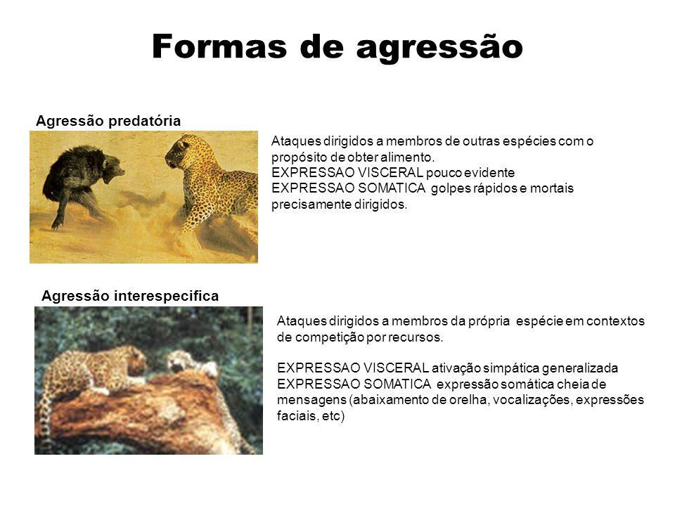 Formas de agressão Agressão predatória Ataques dirigidos a membros de outras espécies com o propósito de obter alimento. EXPRESSAO VISCERAL pouco evid