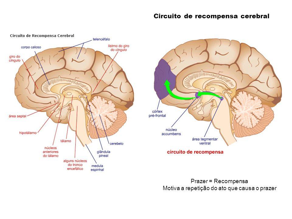 Circuito de recompensa cerebral Prazer = Recompensa Motiva a repetição do ato que causa o prazer