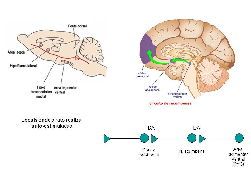 Área tegmentar Ventral (PAG) N. acumbens Córtex pré-frontal DA Locais onde o rato realiza auto-estimulaçao