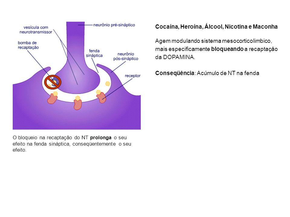 O bloqueio na recaptaçâo do NT prolonga o seu efeito na fenda sináptica, conseqüentemente o seu efeito. Cocaína, Heroína, Álcool, Nicotina e Maconha A