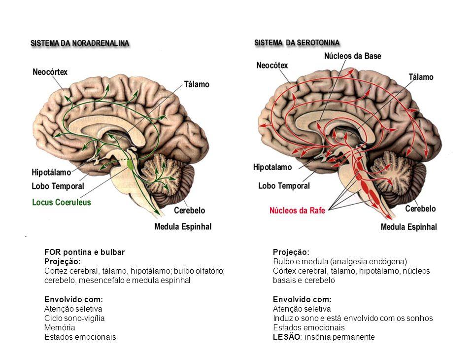FOR pontina e bulbar Projeção: Cortez cerebral, tálamo, hipotálamo; bulbo olfatório; cerebelo, mesencefalo e medula espinhal Envolvido com: Atenção se