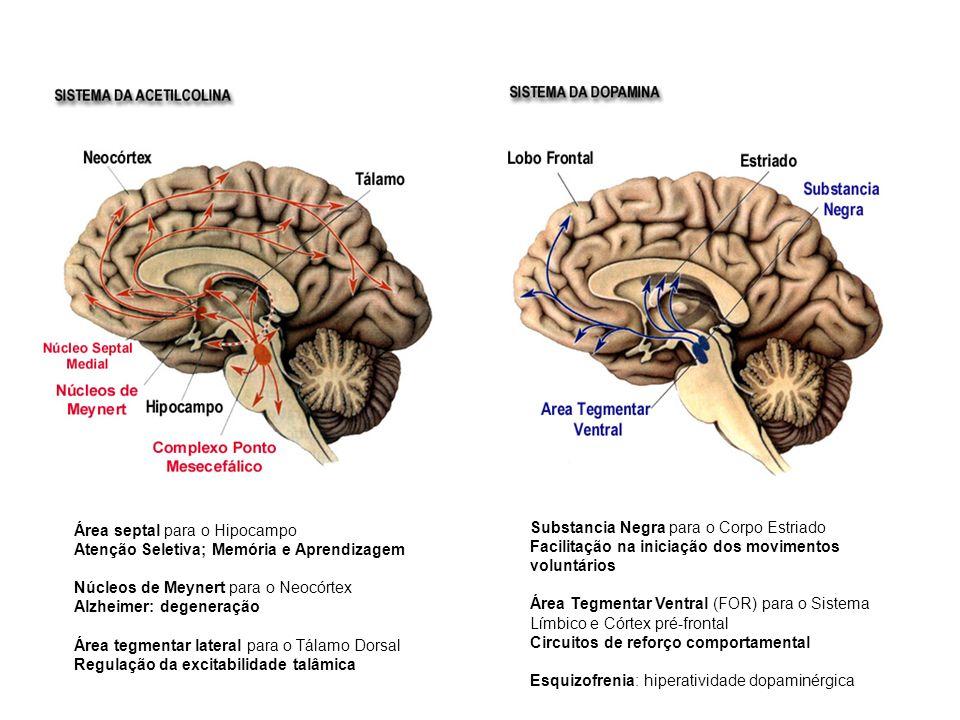 Área septal para o Hipocampo Atenção Seletiva; Memória e Aprendizagem Núcleos de Meynert para o Neocórtex Alzheimer: degeneração Área tegmentar latera
