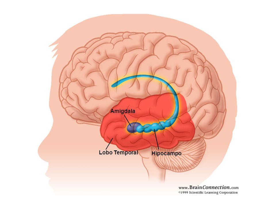 Lobo Temporal Hipocampo Amigdala