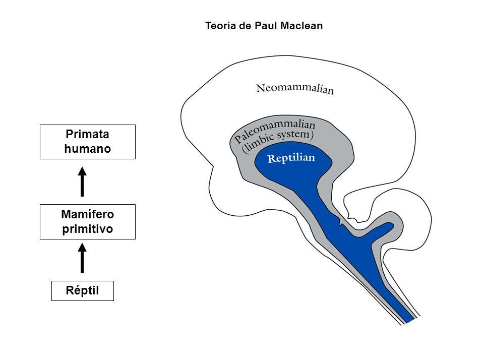 REPTIL Estímulos ambientais Comportamento de sobrevivência Hipotálamo + Tronco encefálico Estímulos ambientais Sistema Límbico Comportamento de sobrevivência MAMIFERO PRIMITIVO EMOÇÕES: aumentou a eficiência dos mecanismos de sobrevivência Medo ou prazer Estímulos sensoriais específicos Comportamento de sobrevivência Estímulos ambientais PRIMATAS (humano) RACIONALIZACAO (Cultura) + emoções Neocórtex Sistema Límbico Medo ou prazerLivre arbítrio Planejamento Decisão, etc