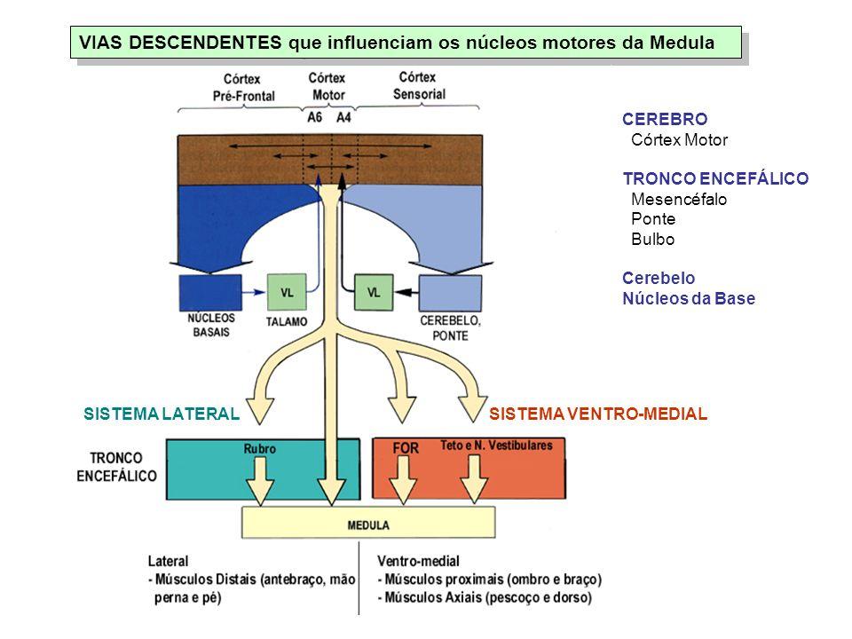 VIAS DESCENDENTES que influenciam os núcleos motores da Medula CEREBRO Córtex Motor TRONCO ENCEFÁLICO Mesencéfalo Ponte Bulbo Cerebelo Núcleos da Base