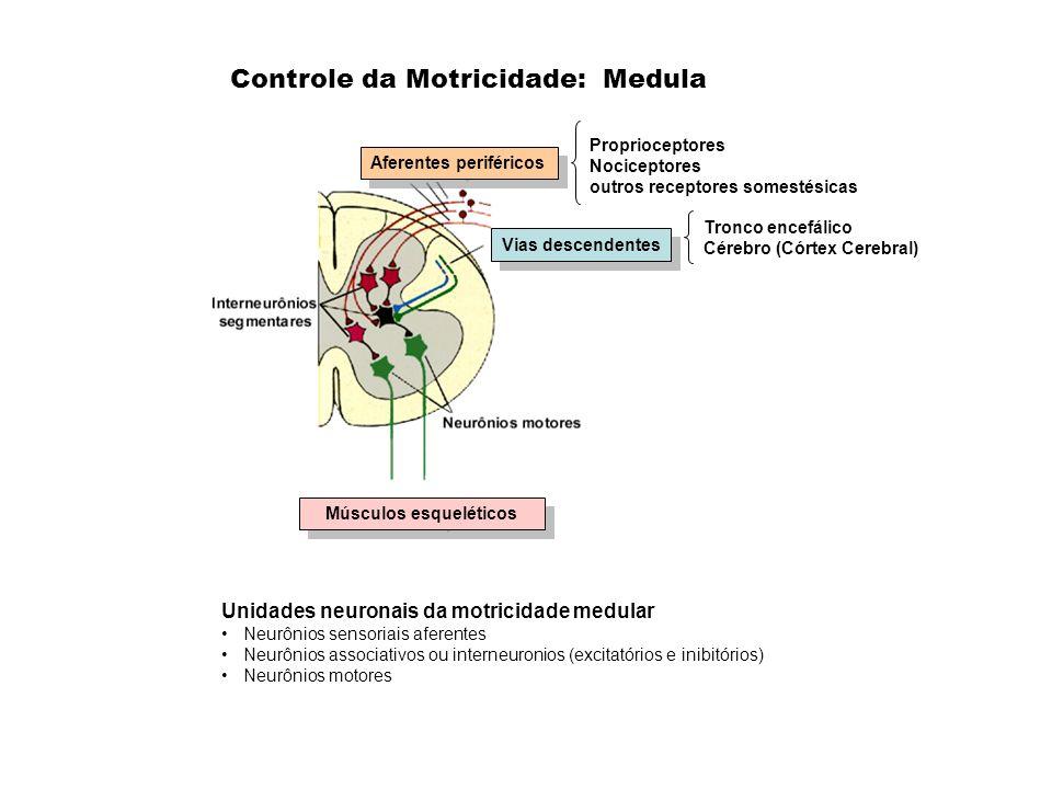 Controle da Motricidade: Medula Aferentes periféricos Proprioceptores Nociceptores outros receptores somestésicas Unidades neuronais da motricidade me