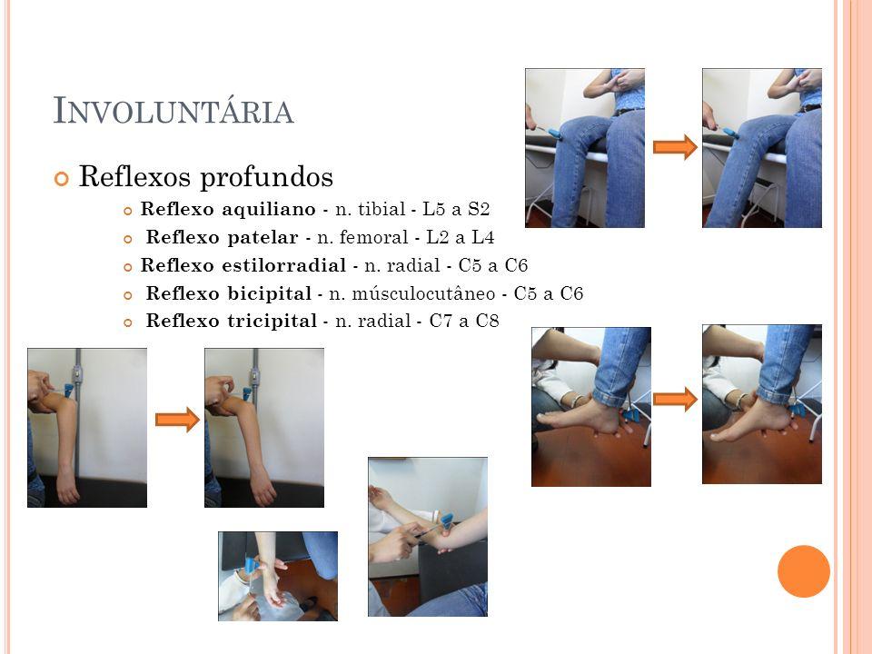 I NVOLUNTÁRIA Reflexos profundos Reflexo aquiliano - n. tibial - L5 a S2 Reflexo patelar - n. femoral - L2 a L4 Reflexo estilorradial - n. radial - C5