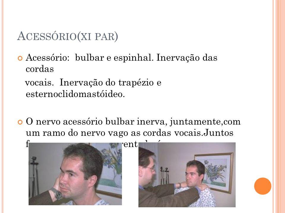 A CESSÓRIO ( XI PAR ) Acessório: bulbar e espinhal. Inervação das cordas vocais. Inervação do trapézio e esternoclidomastóideo. O nervo acessório bulb