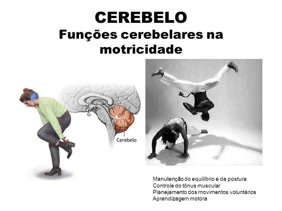 CEREBELO Funções cerebelares na motricidade Manutenção do equilíbrio e da postura Controle do tônus muscular Planejamento dos movimentos voluntários Aprendizagem motora