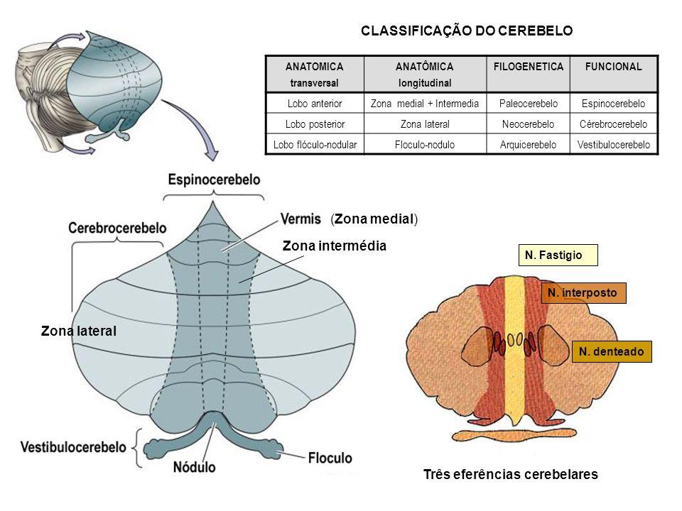 ANATOMICA transversal ANATÔMICA longitudinal FILOGENETICAFUNCIONAL Lobo anteriorZona medial + IntermediaPaleocerebeloEspinocerebelo Lobo posteriorZona
