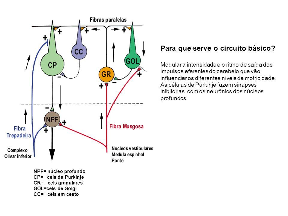 NPF= núcleo profundo CP= cels de Purkinje GR= cels granulares GOL=cels de Golgi CC= cels em cesto Para que serve o circuito básico? Modular a intensid
