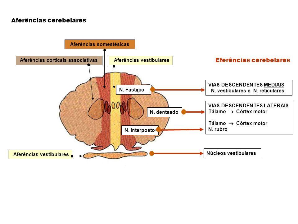 Eferências cerebelares Aferências cerebelares Aferências corticais associativas Aferências somestésicas Aferências vestibulares N. Fastigio VIAS DESCE