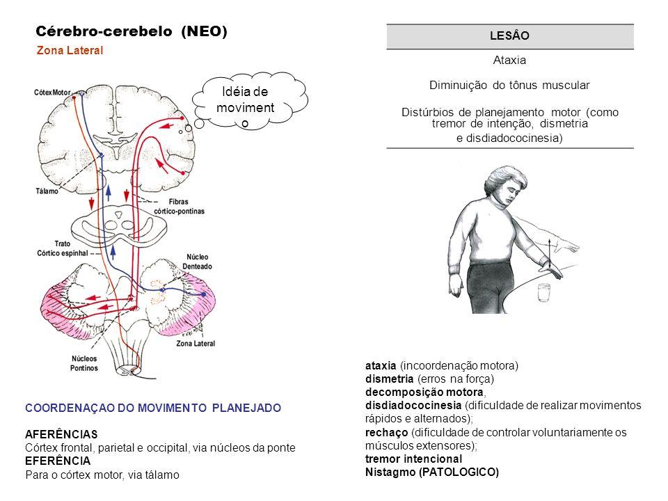 Zona Lateral Cérebro-cerebelo (NEO) COORDENAÇAO DO MOVIMENTO PLANEJADO AFERÊNCIAS Córtex frontal, parietal e occipital, via núcleos da ponte EFERÊNCIA Para o córtex motor, via tálamo Idéia de moviment o LESÂO Ataxia Diminuição do tônus muscular Distúrbios de planejamento motor (como tremor de intenção, dismetria e disdiadococinesia) ataxia (incoordenação motora) dismetria (erros na força) decomposição motora, disdiadococinesia (dificuldade de realizar movimentos rápidos e alternados); rechaço (dificuldade de controlar voluntariamente os músculos extensores); tremor intencional Nistagmo (PATOLOGICO)