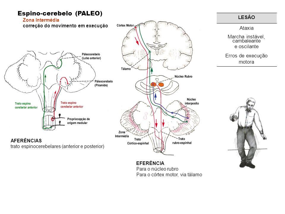 AFERÊNCIAS trato espinocerebelares (anterior e posterior) Espino-cerebelo (PALEO) Zona Intermédia correção do movimento em execução EFERÊNCIA Para o núcleo rubro Para o córtex motor, via tálamo Erros de execução motora Marcha instável, cambaleante e oscilante Ataxia LESÂO