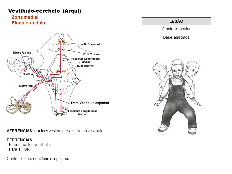 AFERÊNCIAS: núcleos vestibulares e sistema vestibular EFERÊNCIAS - Para o núcleo vestibular - Para a FOR Controle sobre equilíbrio e a postura Vestíbu