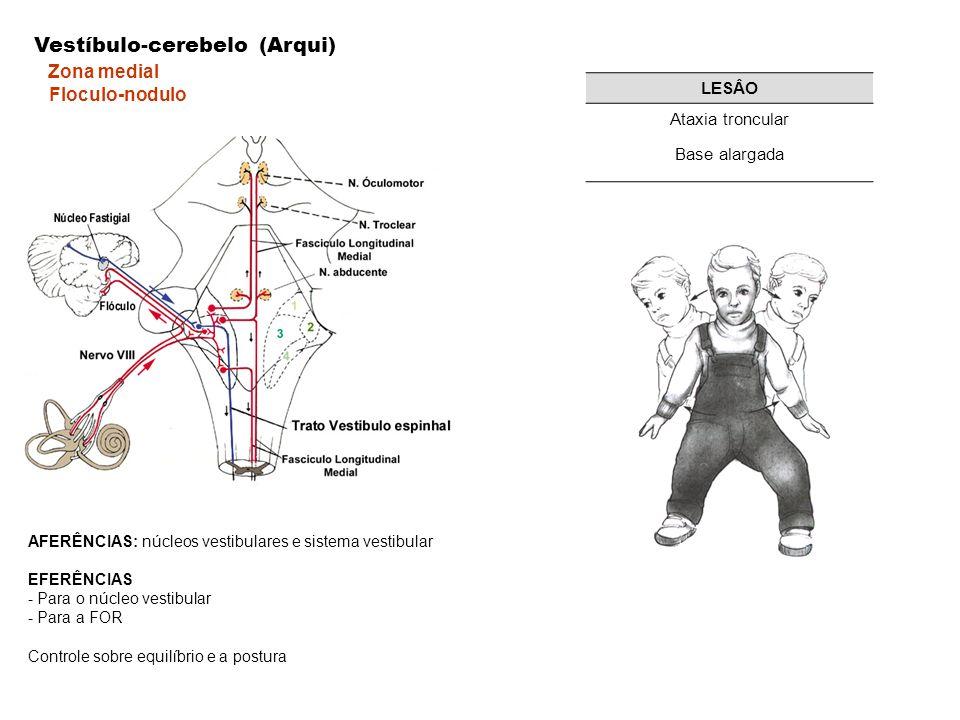 AFERÊNCIAS: núcleos vestibulares e sistema vestibular EFERÊNCIAS - Para o núcleo vestibular - Para a FOR Controle sobre equilíbrio e a postura Vestíbulo-cerebelo (Arqui) Zona medial Floculo-nodulo LESÂO Ataxia troncular Base alargada