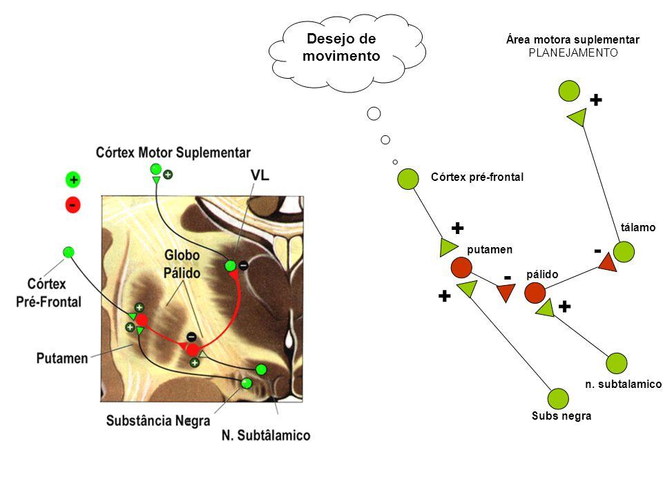 - - Desejo de movimento + Córtex pré-frontal + Área motora suplementar PLANEJAMENTO putamen + n. subtalamico tálamo pálido + Subs negra