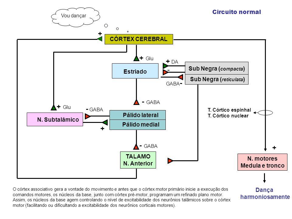 Dança harmoniosamente O córtex associativo gera a vontade do movimento e antes que o córtex motor primário inicie a execução dos comandos motores, os núcleos da base, junto com córtex pré-motor, programam um refinado plano motor.