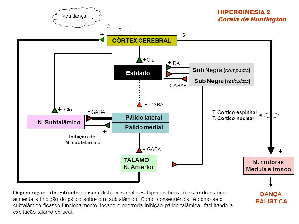 CÓRTEX CEREBRAL Estriado Sub Negra ( compacta ) Sub Negra ( reticulata ) Pálido lateral Pálido medial TALAMO N.