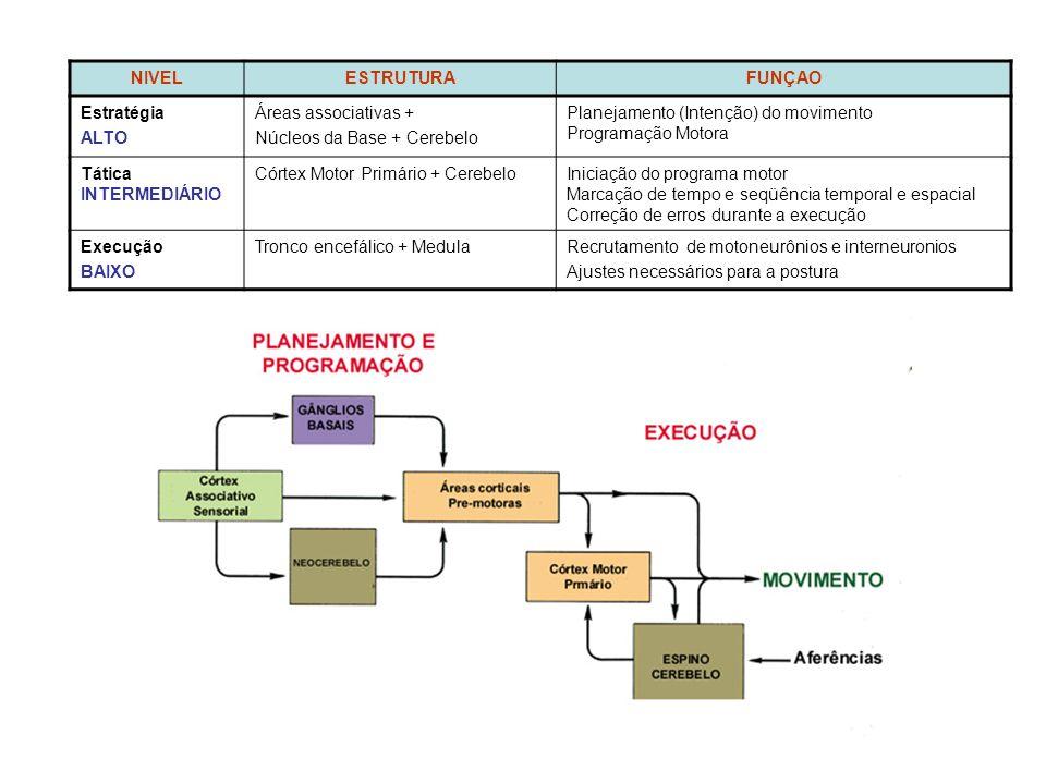 NIVELESTRUTURAFUNÇAO Estratégia ALTO Áreas associativas + Núcleos da Base + Cerebelo Planejamento (Intenção) do movimento Programação Motora Tática INTERMEDIÁRIO Córtex Motor Primário + CerebeloIniciação do programa motor Marcação de tempo e seqüência temporal e espacial Correção de erros durante a execução Execução BAIXO Tronco encefálico + MedulaRecrutamento de motoneurônios e interneuronios Ajustes necessários para a postura