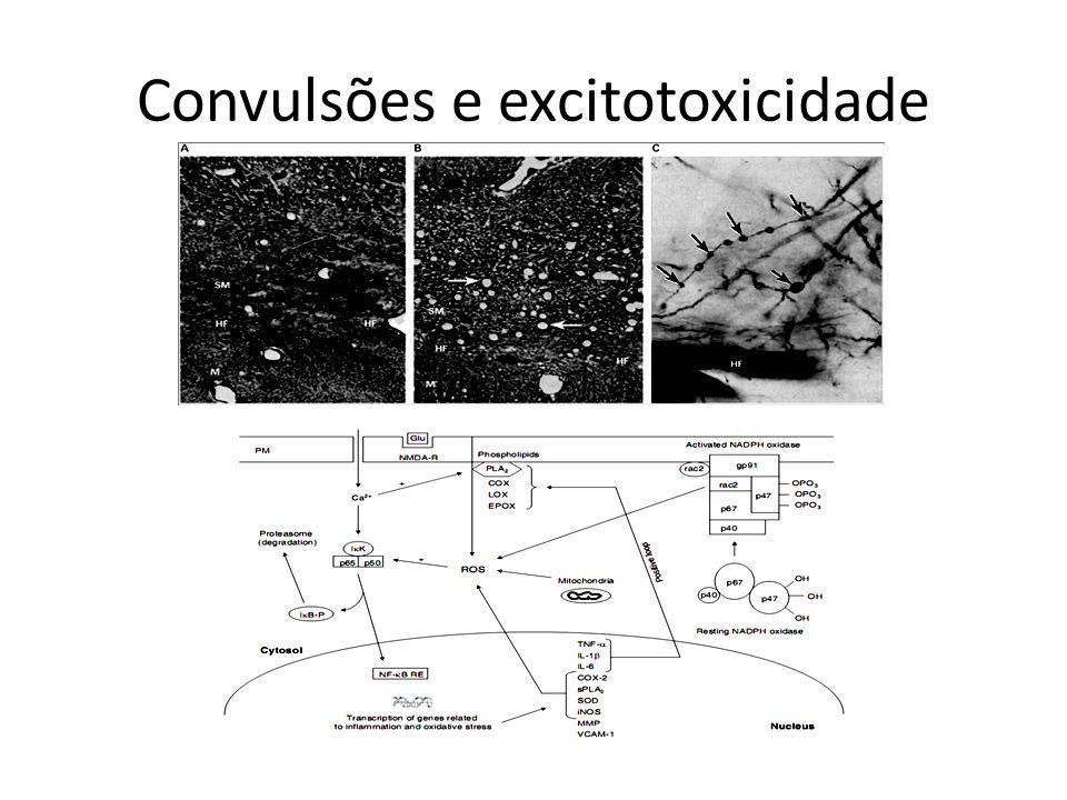 Convulsões e excitotoxicidade